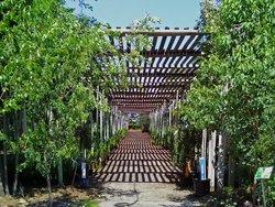 The Saskatoon Berry Farm