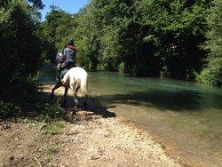 Maneggio Jolly Horse