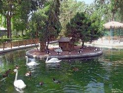 Birds Garden