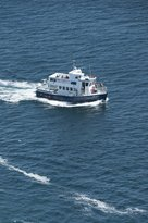 Mullowney's Puffin and Whale Tours
