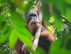 Bukit Lawang - Jungle Trekking Sumatra