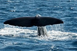 MobyDick Tours - Whales & Dolphins Watching