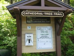 Cathedral Tree Trail