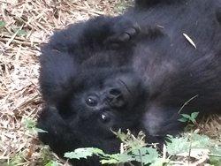 Rwanda Eco-Tours - Short Gorilla Trek