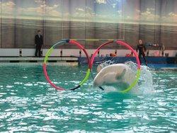 St. Petersburg Dolphinarium