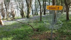 Flyers Disc Golf