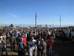 Karakol Cattle Market