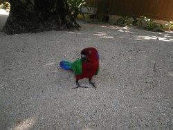 Jack - the talking bird