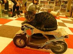 猫まるカフェ上野