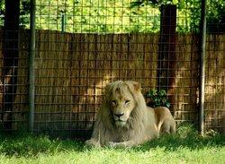 Tier- und Freizeitpark Thüle