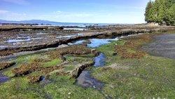 Botanical Beach Provincial Park