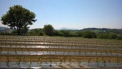 Les champs de piments  après les plantations du mois de mai.