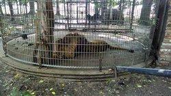 Maple Lane Wildlife Farm