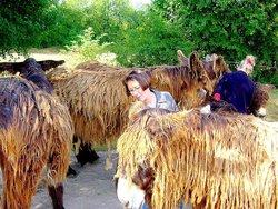 Poitou Donkey Nature Centre (Asinerie du Baudet du Poitou)