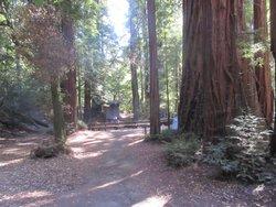Beautiful Redwood Park, Portola State Park, La Honda, CA