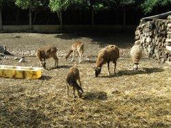 Parc Animalier de l'Emprunt