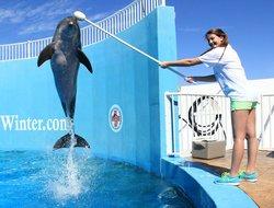 Clearwater Marine Aquarium