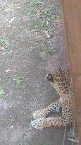 Zoo de Martinique - Habitation Latouche