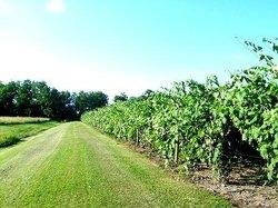 Hosmer Winery