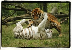 Natur'zoo de Mervent