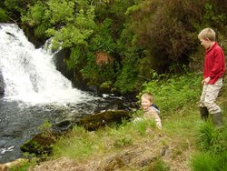 Waterfall Alpaca Farm