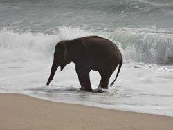 Lucky enjoying the water