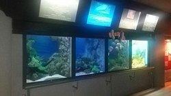Rajamangkala Aquarium Trang