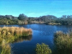 Windswept Cranberry Bog