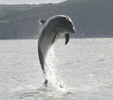 SeaMor Dolphin Watching Boat Trips