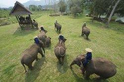 Nam Ou Elephant Farm