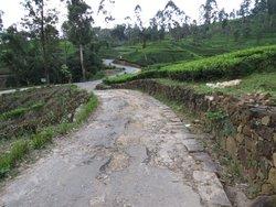 Ceylon Tea Trails (Aug 2013): Horrible 'road' leading to Norwood Bungalow