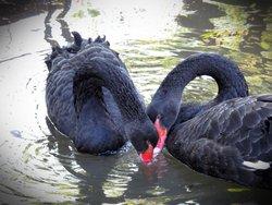 Petmasters Bird Park