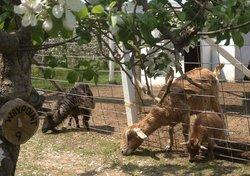 Apple Holler Family Farm