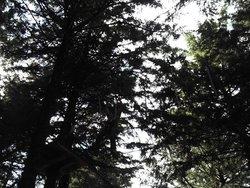 Parco Avventura di Viggiano
