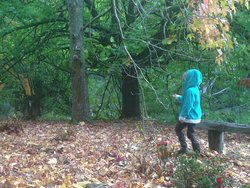 Walking through the grounds collecting kindling