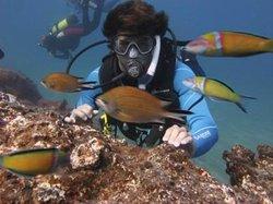 Davy Jones Diving
