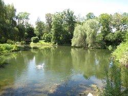 Ponds...swans...
