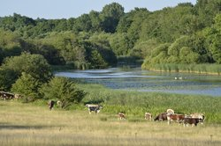 Knepp Wildland Safaris