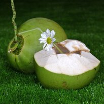 The Royal Coconut