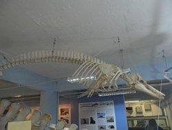 Museu de Ciências Naturais da Universidade Federal do Rio Grande do Sul – MUCIN