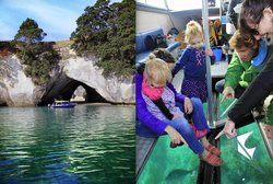 Glass Bottom Boat Whitianga