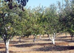 Historic Orchard