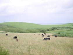 Soya Hill Periglacial Landforms