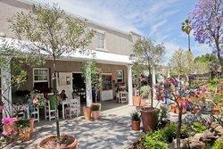 Blue Magnolia Coffee Shop