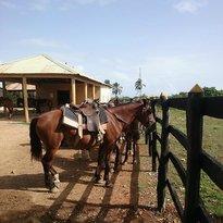 Rais Ranch - Excursion a Caballo en la Playa