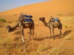 Sahara Desert Trips - Day Tours
