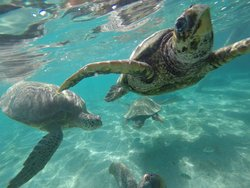 Guanaja Divers