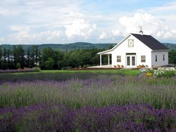 ‪Lockwood Lavender Farm‬