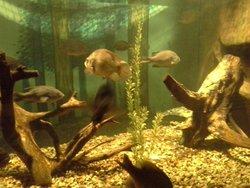 Aksarben Aquarium