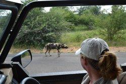 Discover Kruger Safaris